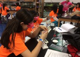 Registration Open for 2017 GEMS (Girls in Engineering, Math, and Science) Conference